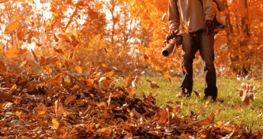 Nettoyage printemps et automne