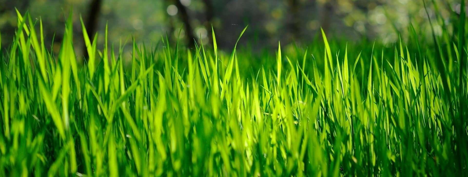 Le gazon est toujours plus vert de ton côté de la clôture